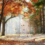 feuille qui tombe d'un arbre en saison automnale